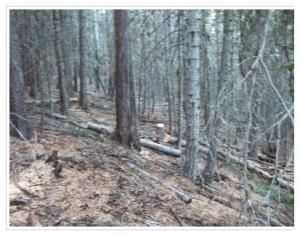 woods mcshane